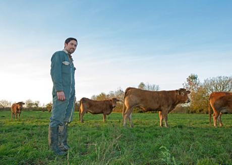 David Gélineau et son troupeau de vache limousine.
