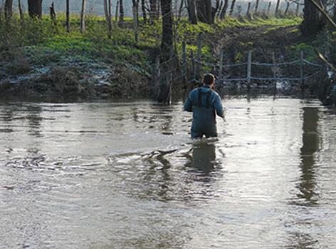 David gélineau traverse la rivière pour rejoindre son troupeau