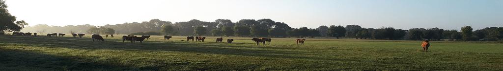 vue du troupeau de l'exploitation des basses vallées